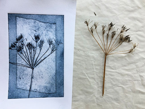 cow parsley and finished print