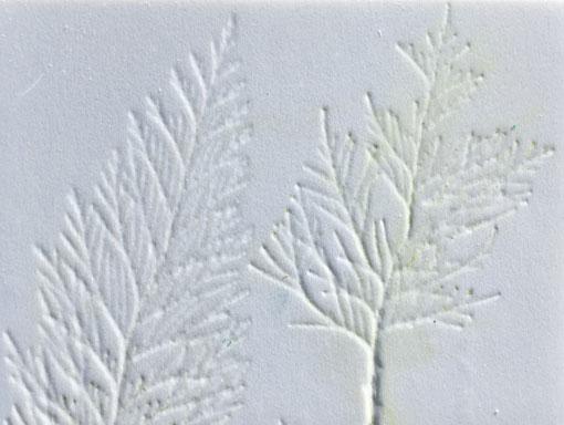 leylandii embossed into foam board