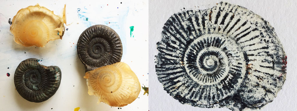 ammonite casts and print