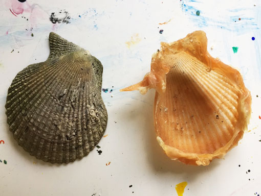 a latex cast of a seashell